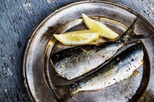 poisson gras viande maigre - sardines