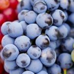 septembre raisin